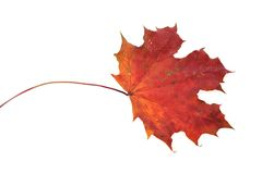 Beautiful autumn colour leaf Stock Images