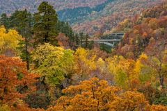 Beautiful Autumn colour season at Hachimantai area. Beautiful Autumn colour season at Hachimantai area, Akita, Japan Stock Photos