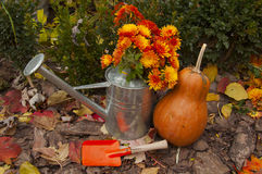 Beautiful autumn composition in orange color Stock Images