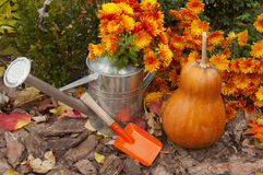 Beautiful autumn composition Royalty Free Stock Photography