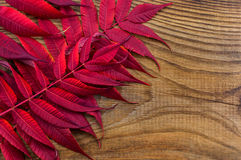 Beautiful autumn composition on wooden background Royalty Free Stock Photo