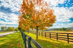 Free Beautiful Autumn Country Landscape With Road, Colorful Tree And Pastures Of Horse Farm Royalty Free Stock Photos - 169212718