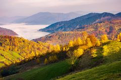 Beautiful autumn countryside. Trees in yellow foliage. cloud inversion in the distant valley stock images