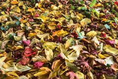 Beautiful autumn covering background of fallen yellow, green and red leaves on campus of university campus, Dublin, Ireland