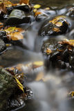 Beautiful autumn creek. With some leafs Royalty Free Stock Image