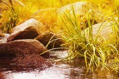 Beautiful autumn creek Stock Photos