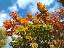 Beautiful autumn day Royalty Free Stock Photos
