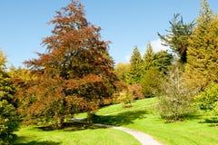 Beautiful autumn day Royalty Free Stock Image