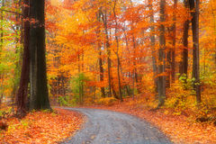 Beautiful autumn drive Stock Photos