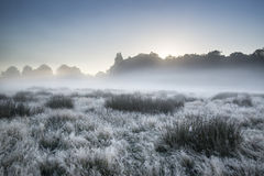 Beautiful Autumn Fall foggy dawn landscape over frost covered fi Royalty Free Stock Images