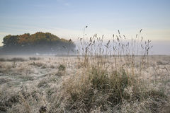 Beautiful Autumn Fall foggy dawn landscape over frost covered fi Stock Image