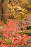 Beautiful Autumn Fall forest vibrant landscape scene Stock Photos