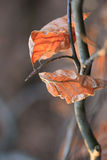 Beautiful autumn fall leaves. Beautiful coloured leaves in autumn, fall, in a forest stock photos