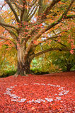 Beautiful Autumn Fall nature fairy ring mushrooms Royalty Free Stock Photo