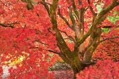 Beautiful Autumn Fall nature image landscape Stock Image