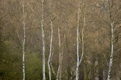 Beautiful Autumn Fall Winter forest woodland landscape fine art scene. Beautiful Autumn Fall Winter forest woodland landscape scene stock photo