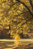 Beautiful autumn fall Royalty Free Stock Image