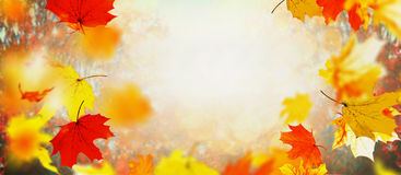 Beautiful autumn falling leaves on sunny day and sunlight, outdoor nature background royalty free stock images