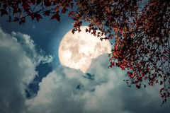 Beautiful autumn fantasy. Maple tree in fall season and full moon with cloud, star in night skies background. Retro style artwork with vintage color tone Stock Images