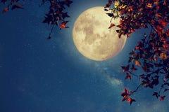 Beautiful autumn fantasy Stock Photos
