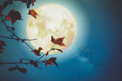 Beautiful autumn fantasy. Maple tree in fall season and full moon with milky way star in night skies background. Retro style artwork with vintage color tone Stock Image