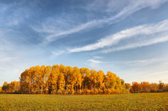 Beautiful autumn field Stock Images