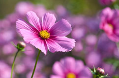 Beautiful autumn flower. Close up Stock Image