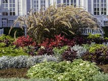 Free Beautiful Autumn Flowerbed With Purple Fountain Grass Stock Photo - 159440160