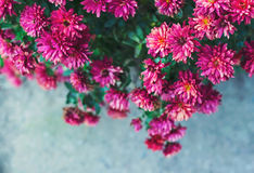 Beautiful autumn flowers. Photographed from above Stock Photography