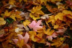 Beautiful Autumn Foliage Royalty Free Stock Photo