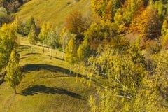 Beautiful autumn foliage Royalty Free Stock Photos