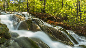 Free Beautiful Autumn Foliage And Mountain Stream In The Forest Stock Images - 35109874