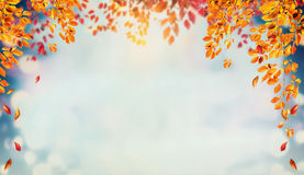 Beautiful autumn foliage background with brunches and falling tree leaves at sky royalty free stock photo