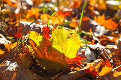 Beautiful autumn foliage Royalty Free Stock Image