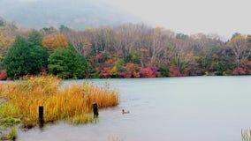 Beautiful autumn foliage at Chuzenji Lake in the rain