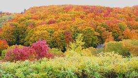 Beautiful autumn foliage of Hachimantai mountain area