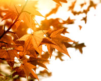 Beautiful autumn foliage in late afternoon Stock Images
