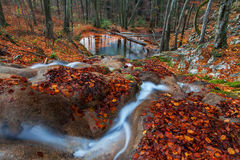 Beautiful autumn foliage and mountain stream in the forest Royalty Free Stock Photos
