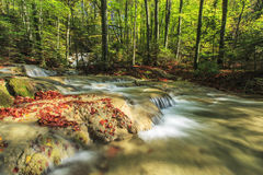 Beautiful autumn foliage and mountain stream in the forest Royalty Free Stock Image