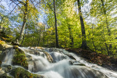 Beautiful autumn foliage and mountain stream in the forest Royalty Free Stock Photo