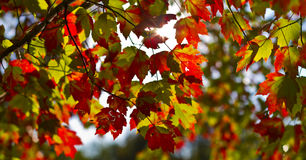 Beautiful autumn foliage scenery Stock Photo