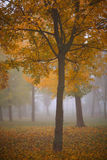 Beautiful autumn foliage, trees and fog Royalty Free Stock Photography