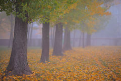 Beautiful autumn foliage, trees and fog Stock Image