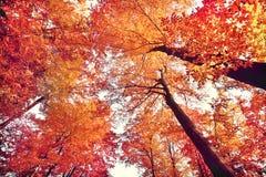 Beautiful autumn forest. Beautiful fall forest scene stock image