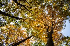 Beautiful autumn forest. Autumn forest trees. nature green wood sunlight backgrounds Stock Image