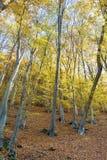Beautiful autumn forest .Autumn landscape. Beautiful  autumn landscape with colorful yellow trees Royalty Free Stock Photos