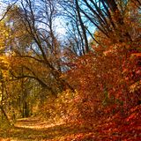beautiful autumn forest closeup royalty free stock images