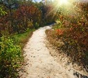 beautiful autumn forest closeup royalty free stock photo