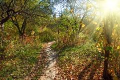 beautiful autumn forest closeup stock photography