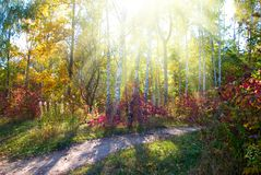 beautiful autumn forest closeup royalty free stock photography